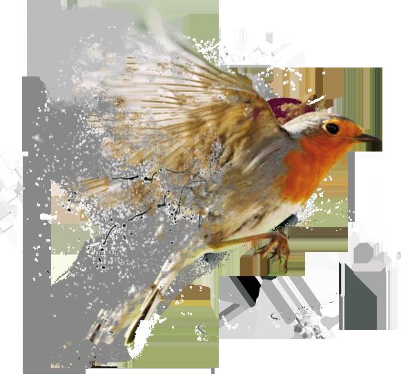 oiseau graphique