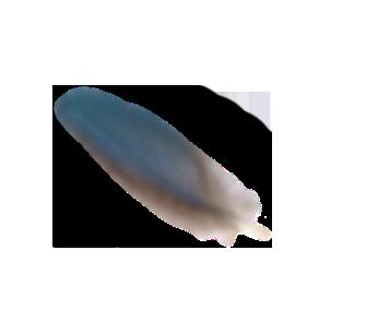 plume, graphiste indépendant lyon