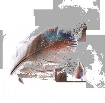 plume, infographiste print lyon
